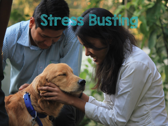 Stress-Busting